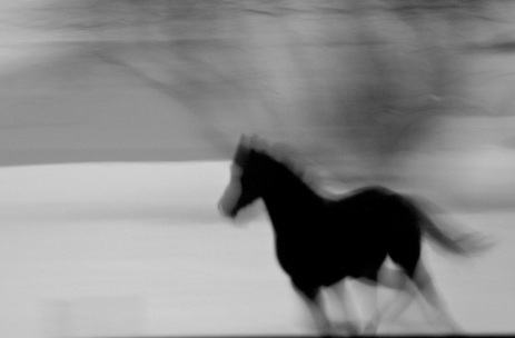 Horse Rider - black and ghostly2
